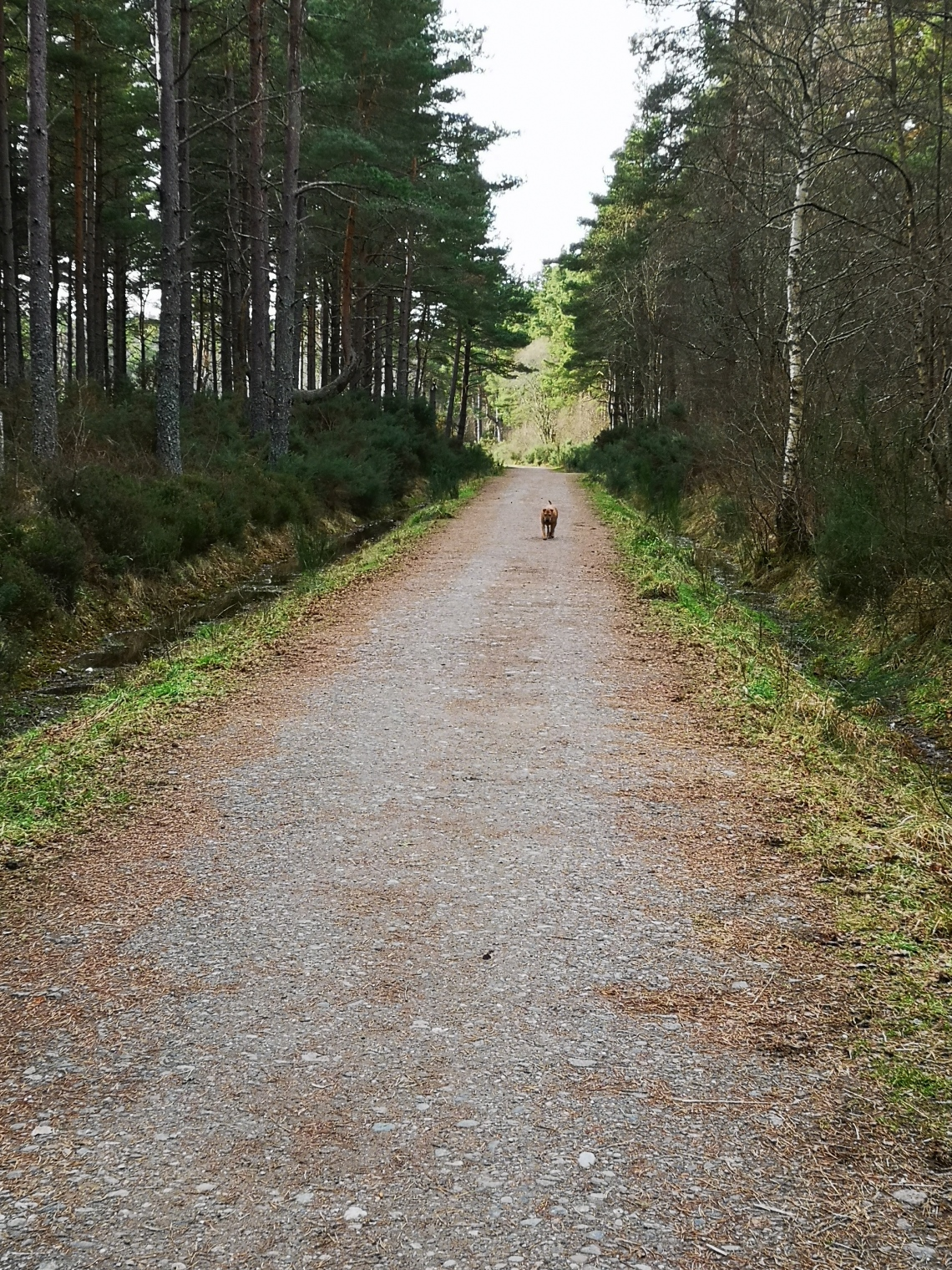 Dog-friendly Scotland Walk (by From One Owner to Another)