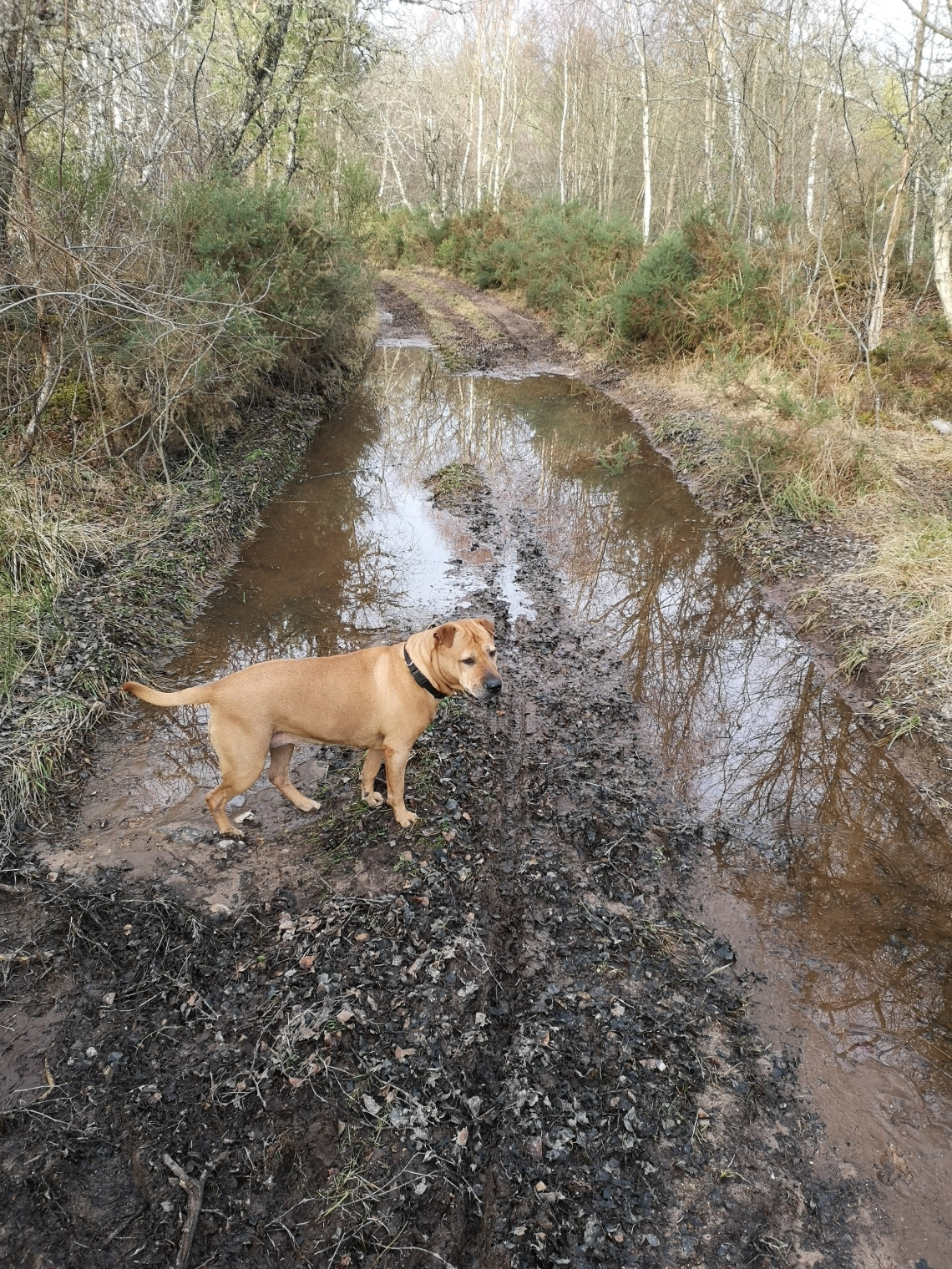 Muddy dog walks (by From One Owner to Another)